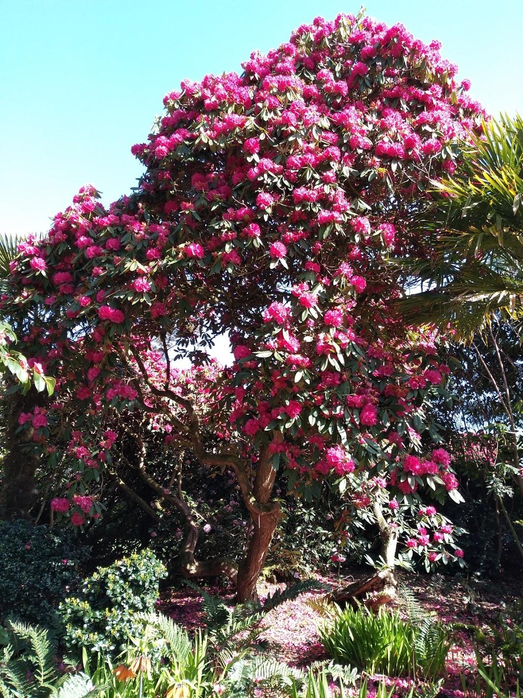 Heligan Tree