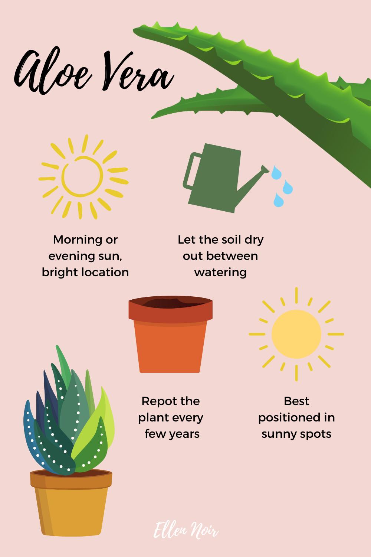 aloe vera plant care tips