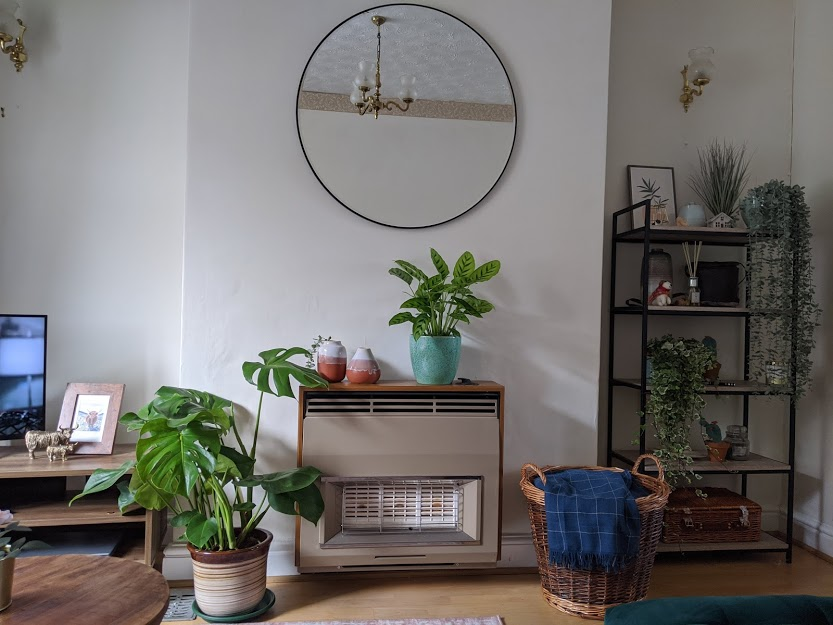 10 Easy to Look After Houseplants and Care Tips