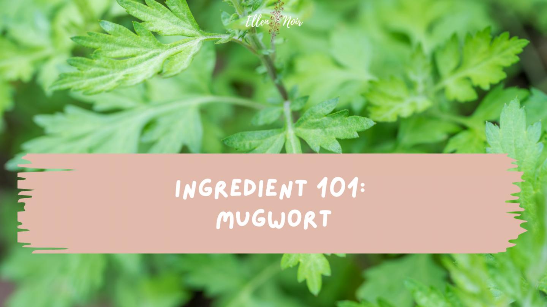 Ingredient 101: Mugwort